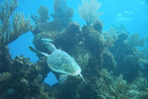 Underwater_reef